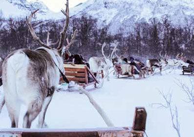 reindeer-sledding-sami-culture
